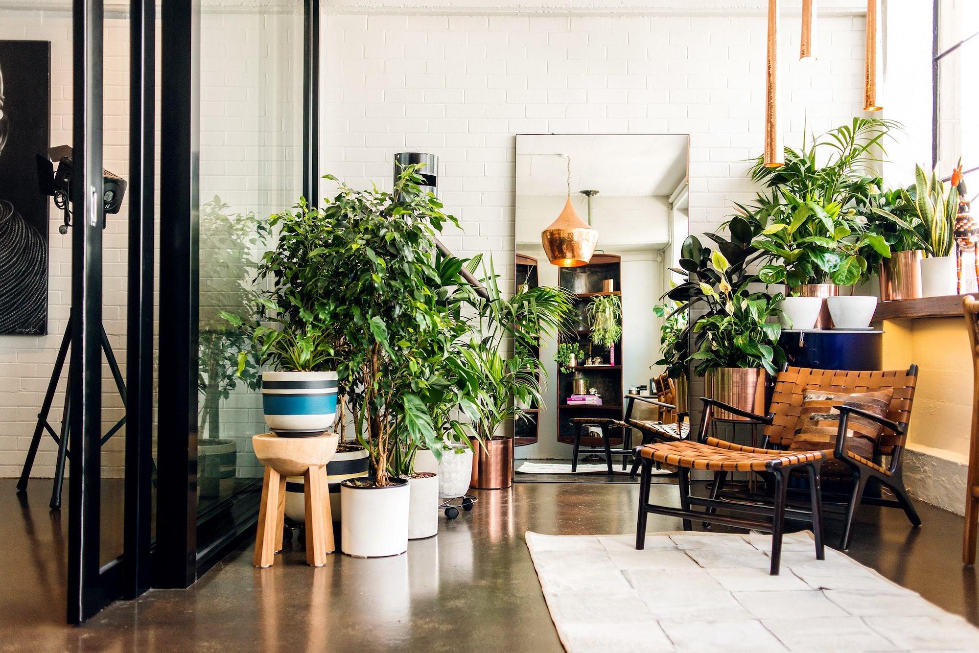 go near airbnb - neomag.